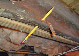 Destroyed crawl space structural wood in Weaverville