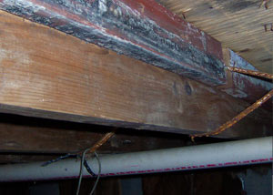Rotting, decaying wood from mold damage in Clemson