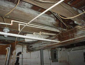 a humid basement overgrown with mold and rot in Taylors